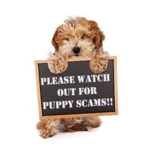 breeder-scams